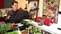Gardening 101 Ep1: Indoor Vegetable Seed Starting Basics: Seeds, Starting Supplies & Lighting - YouTube