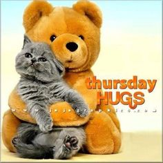 Thursday Hugs quotes quote days of the week thursday thursday quotes happy thursday happy thursday quotes Nice Good Morning Images, Good Morning Funny, Hug Pictures, Funny Cat Pictures, Beautiful Kittens, Cute Cats And Kittens, Funny Cats, Funny Animals, Cute Animals