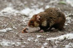Блог - 10 крутых фото о жизни диких хомяков для тех, у кого был тяжелый день