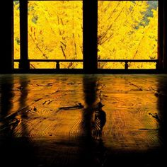 お疲れ様(    )ノ  今日は雨の中宮島へ紅葉を撮りに行ってきました 今日は月曜日なので人少ないと思って行ったのに団体客でごった返し #千畳閣 #豊国神社 #銀杏 #いちょう #setouchigram  #Lovers_Nippon_2015行秋 by shimada71