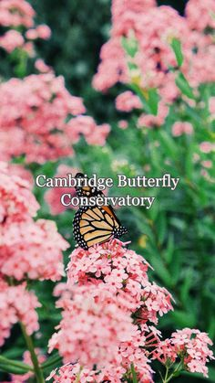 The Cambridge Butterfly Conservatory showcases the beauty of butterflies, birds, and other small creatures. Tropical Garden, Gift Store, Conservatory, Cambridge, Travel Guide, Butterflies, Exotic, Creatures, Birds