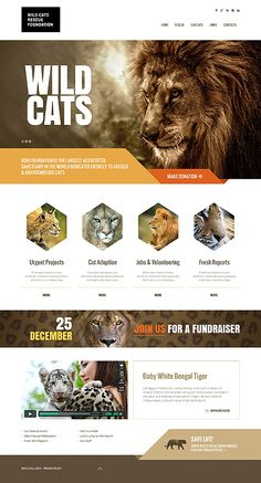 Great idea for a zoo website