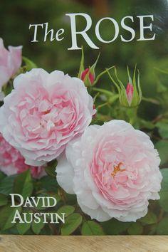 David Austin over rozen