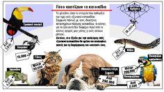 Φίδια και ιγκουάνα αντί για σκυλιά και γάτες - Ελλάδα - Επικαιρότητα - Τα Νέα Οnline World Languages, Infographics, Greece, Greece Country, Infographic, Info Graphics, Visual Schedules