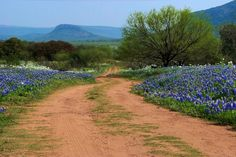 Springtime in the Texas Hill Country — Nomadic Pursuits