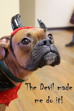Halloween Event › Green Acres Boxer Rescue of Wisconsin
