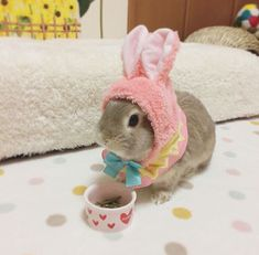 Our Favorite Bunny Costumes! - Hop to Pop Cute Little Animals, Little Pets, Cute Funny Animals, Bunny Supplies, Cute Bunny Pictures, Beautiful Rabbit, Bunny Cages, Cute Baby Bunnies, Fluffy Bunny