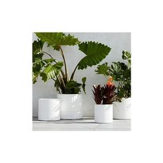 West Elm Grid Planter, Small Round (3,180 PHP) ❤ liked on Polyvore featuring home, outdoors, outdoor decor, white, white planter, round planter, lightweight planters and west elm