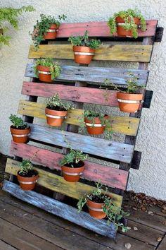 Jardin sur grosse palette en bois colorée