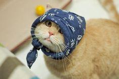 Scarf kitty