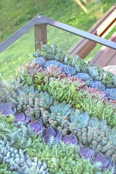 Make your own succulent table! Author Sharon Asakawa turns the tables on overpriced floral design in seven steps. Succulent Gardening, Cacti And Succulents, Planting Succulents, Container Gardening, Organic Gardening, Air Plants, Garden Plants, Indoor Plants, House Plants