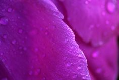 Forgetful Summer Days by Angela Goguen Morning Dew, Macro Photography, Summer Days, Pink Flowers, Crates, Amethyst, Bloom, Texture, Crystals