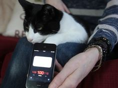 World's loudest cat? Merlin's purr could drown out a classroom of children