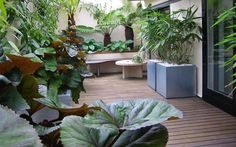 #Lush #architectural #subtropical #roof #terrace #garden #rooftop #central #London #Butlers #Wharf #Shad #Thames designed and created by contemporary garden designers MylNdscapes. Copyright Amir Schlezinger.