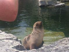 Frankfurt, Seals, Animals, Stamps, Animales, Animaux, Harbor Seal, Animal, Seal