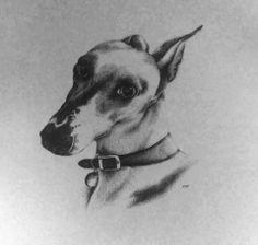 #dog #illustration #greyhound #art #sketch #pencil #drawing #pet