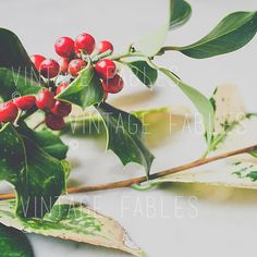 Christmas Stock Photo  Social Media Photo  by vintagefables