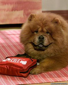 Pet First-Aid Kit