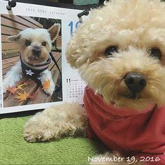 ・ ココちゃ〜ん❤️ ・ やっと来てくれたね〜❣️ ずっと待ってたよ〜😊 しかも、土日でラッキー👍 ・ ・ #ココちゃん #ヨークシャーテリア #ヨーキー #福 #愛犬 #犬 #プードル #トイプードル #タイニープードル #dog #poodle #toypoodle #大切な家族 #最愛の息子 #愛おしい #大好き #幸せ #目に入れても痛くない #ワンコなしでは生きて行けません会 #ふわもこ部