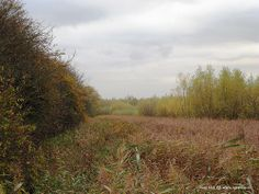 Autumn colours near Rhoon, The Netherlands