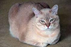 """Képtalálat a következőre: """"fekete fehér rajzolt macska"""""""