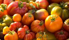 Different heirloom tomatoes: growing tomatoes, how to grow tomatoes