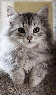 cutest cat ever!