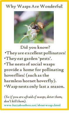 Do Wasps Pollinate Flowers?