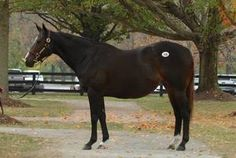 Cool Storm(2006)(Filly) Storm Cat- She's A Winner By AP Indy. 3x4 To Secretariat & Northern Dancer, 5x5 To Native Dancer, 5(F)x5(F) To Buckpasser. Unraced. Full Sister To Bluegrass Cat.
