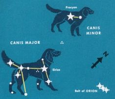 """Constellation of the Month: Canis Major  <a href=""""http://www.constellationofthemonth.com"""" rel=""""nofollow"""" target=""""_blank"""">www.constellation...</a>"""