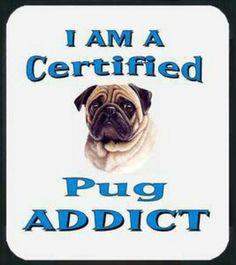 us why YOU are a Pug Addict too? bark at us @ Pug Love, I Love Dogs, Pug Quotes, Amor Pug, Pug Mug, Pug Pictures, Pug Pics, Pugs And Kisses, Baby Pugs