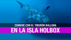 Holbox: la isla tropical del tiburón ballena