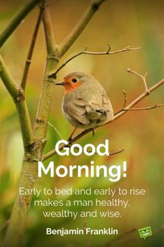 Good morning quote about the benefits of waking up early by Benjamin Franklin. On photo with cute bird. Happy Good Morning Quotes, Morning Quotes Images, Good Day Quotes, Good Morning Texts, Good Morning Inspirational Quotes, Morning Greetings Quotes, Good Morning Messages, Morning Pictures, Good Morning Wishes