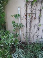 installing a greywater system, and picking the right detergents
