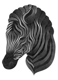 Zebra by Patrick Seymour