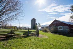 Paddocks and barn at 10249 RR Uxbridge Barn, Plants, Converted Barn, Barns, Planters, Warehouse, Shed, Plant, Planting