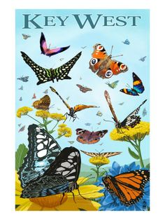 Key West Butterfly Garden