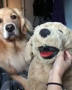 Try Not To Laugh – Funny Animals Videos 2019 'Pick up lines' : Funny Dogs Funny Animal Videos, Cute Funny Animals, Funny Animal Pictures, Animal Memes, Cute Baby Animals, Funny Cute, Funny Dogs, Hilarious, Pet Videos
