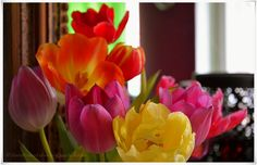 Blühend, bunte Tulpen https://www.facebook.com/EssenReisenLeben #EssenReisenLeben #Frühling #Tulpen #Frühling