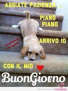 Buonanotte Immagini belle foto facebook whatsapp ~ ImmaginiBuongiornoBelle.it Good Morning Good Night, Day For Night, Good Day, Cute Baby Animals, Animals And Pets, Italian Memes, Disney S, Cute Pictures, Funny Memes