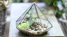 geometric  terrariums Glass Terrarium, Terrariums, Ceramic Planters, Floating Frame, Classic Elegance, Plant Holders, Artificial Plants, Garden Planters, Air Plants