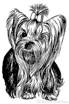 yorkshire-terrier-dog-hand-drawn-vector-llustration-isolated-41963049.jpg