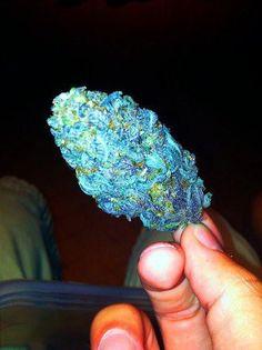 Sticky icky #blue #kush