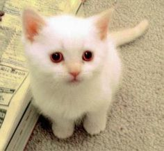 Como escolher um nome para o Gato ou qualquer Filhote http://miadosnaweb.blogspot.com.br/2013/02/nome-para-o-gato.html