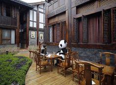 haudou panda chendgu cina