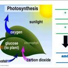 Use this drawing of the photosynthesis process for students to fill in as a worksheet, as a transparancy or simply a bulletin board illustration.    ...
