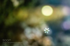 Little starfish by the-mm