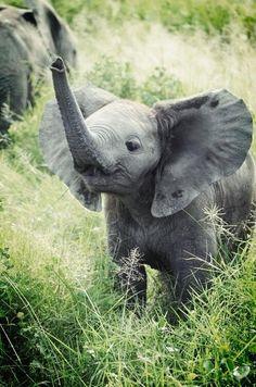 Baby elephant More
