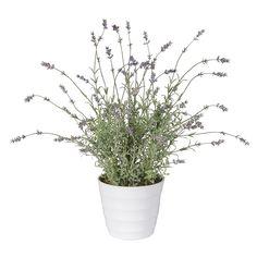 Faux lavender, £38.00 Faux, Homeware, Beautiful Mirrors, Dark Hallway, Brighten, Light