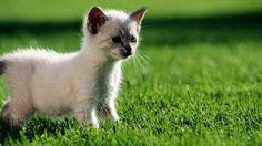 gatti cuccioli - Cerca con Google